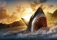 isurvived-1024x768-wallpaper-shark